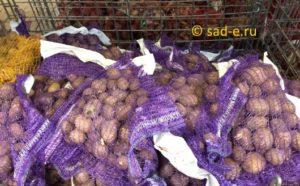 Картофель в магазине