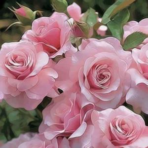 Где купить розы в Москве